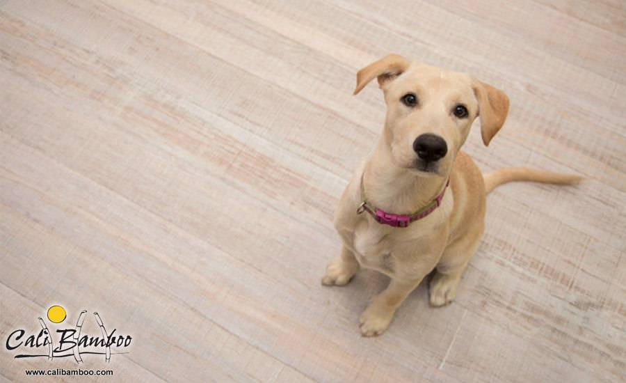 Ginger looks adorable on her Rustic Beachwood bamboo flooring!