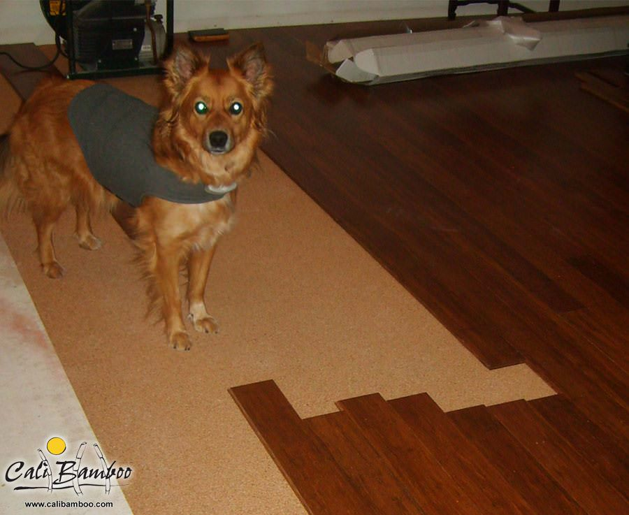 Apple the Golden Retriever helping her own lay down some Java Fossilized® bamboo flooring!