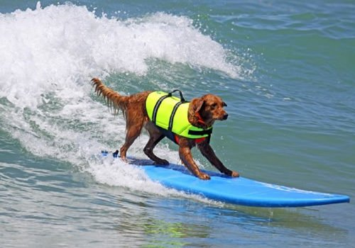 Confessions of a Surfing Newbie