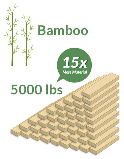 Bamboo Produces 5000 Pounds of Material in 30 Years, 15 Times More Than Pine Trees