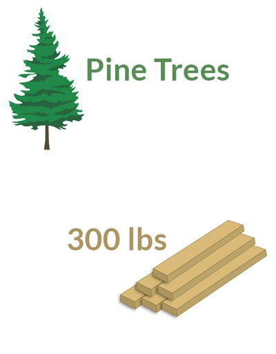 Pine Trees Produce 300 Pounds of Material in 30 Years