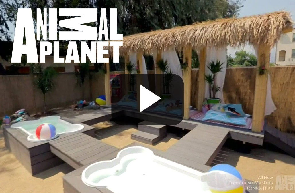 Pet Nation Renovation Builds Pet Paradise with Cali Bamboo